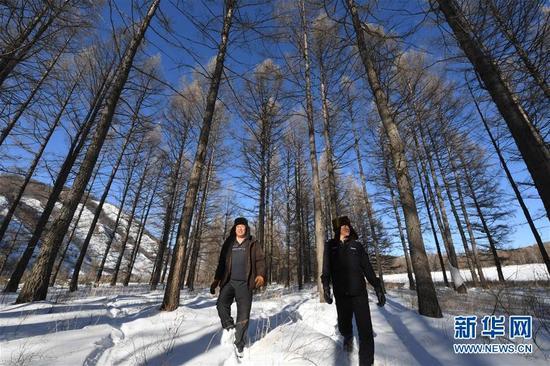 1月10日,张明裕(左)和陈庆林(右)在阿尔山市光顶山林场进行日常巡护工作。他们俩都干了10多年的伐木工作,停伐之后,他们成了护林员。