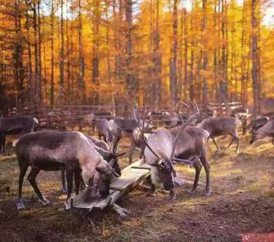 (内容来源:内蒙古旅游发展委员会)
