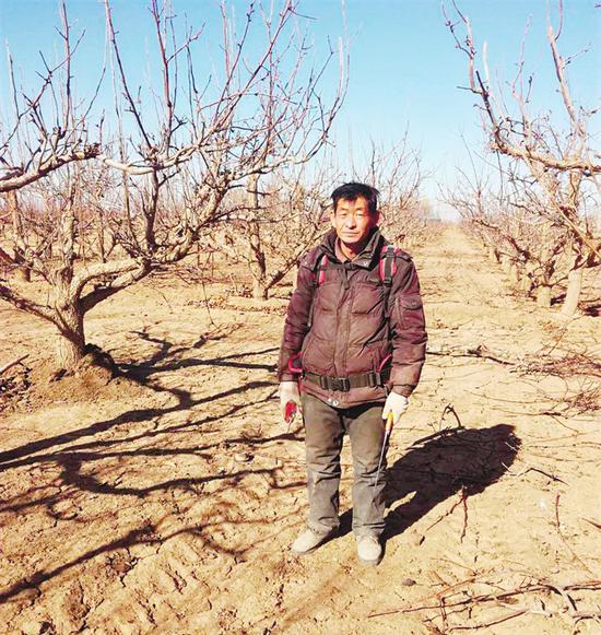 张文义冬季不停歇,自家40亩果园都要自己修剪。本报记者 韩继旺 摄