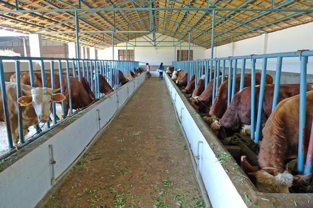 巴彦淖尔市14.4万农牧户融入产业化发展链条