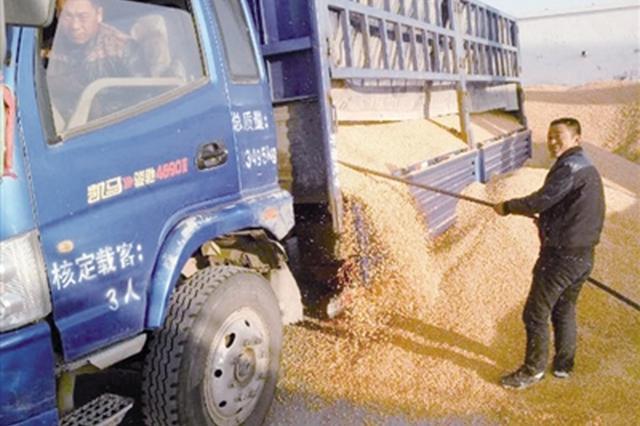 鄂尔多斯:共享粮行让企业和农民实现共赢