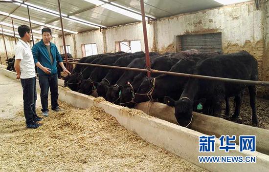 罗勇(右)与养牛大户商量产业带动问题。