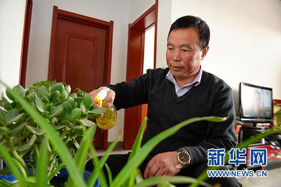 马国权在润丰村的新家中给绿植浇水(2月18日摄)。新华社发(冯开华 摄)