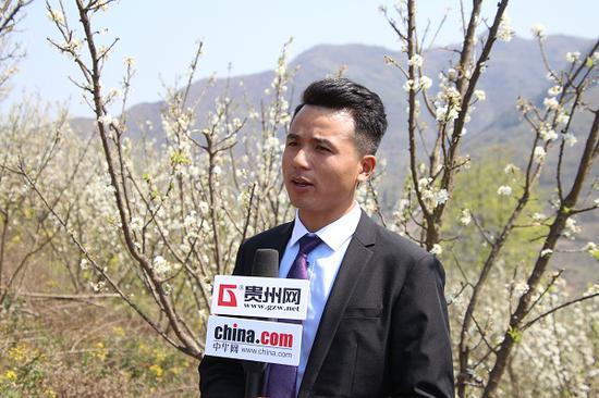 春权蜂糖李种植销售有限公司负责人李啟坤接受媒体采访