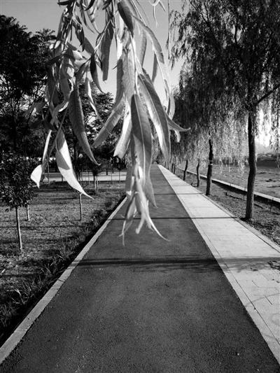 公园里的健身步道。