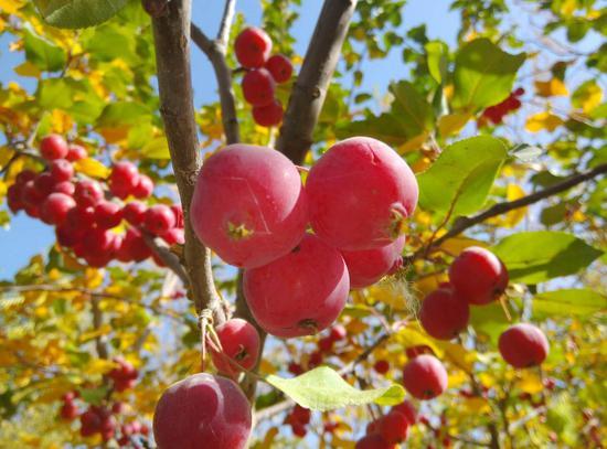 新疆和田:花卉种植托起农民致富梦
