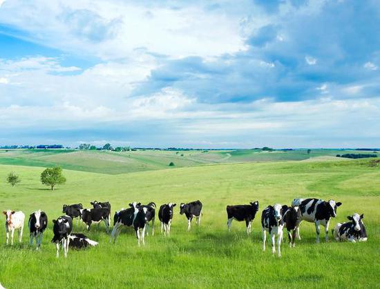 市场乐观,政策利好,国产奶粉品牌齐发力