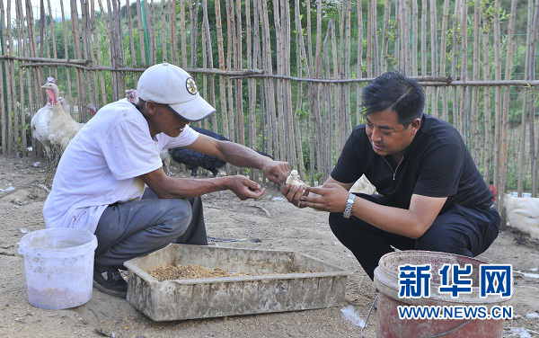 于玉龙(右)与村民一起在观光园养殖区内查看小鸡生长情况