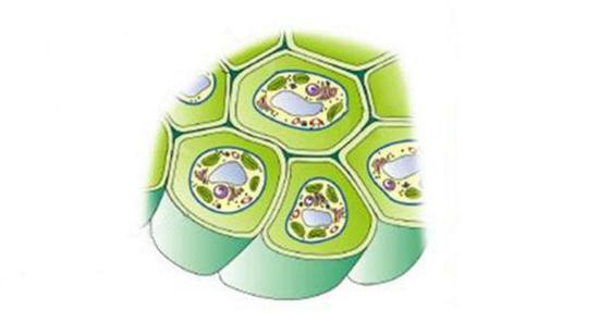 【2细胞壁示例图片】