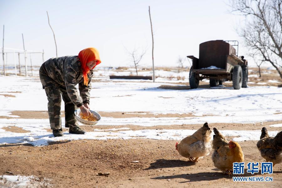 3月1日,宁夏灵武市白土岗乡海子井村,村民吴秀花在喂鸡。