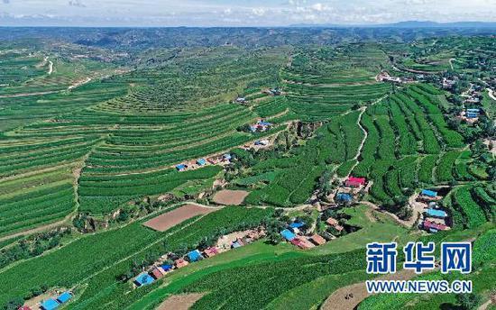 宁夏固原市彭阳县的梯田景观(2018年7月16日摄,无人机照片)。新华社记者 王鹏 摄