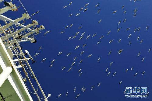 """南大洋无数海鸟好像""""战斗机"""""""