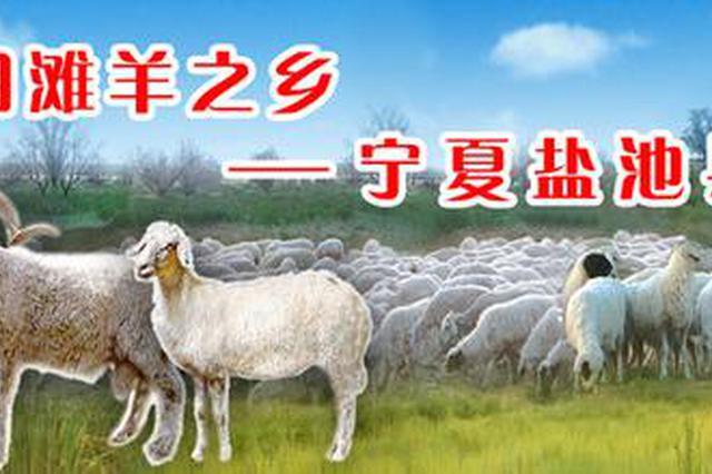 """""""绿水青山就是金山银山""""—— 盐池县:白了滩羊 绿了草原 红"""