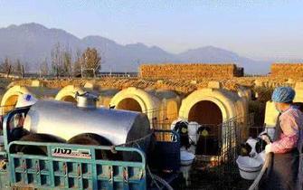 宁夏农垦加快发展现代农业产业