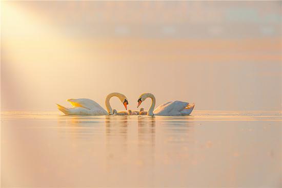 關照耀 《愛》 第四屆天鵝之城——中國三門峽自然生態國際攝影大展參展作品