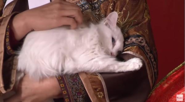 孙俪领养的《甄嬛传》中的白色猫咪。