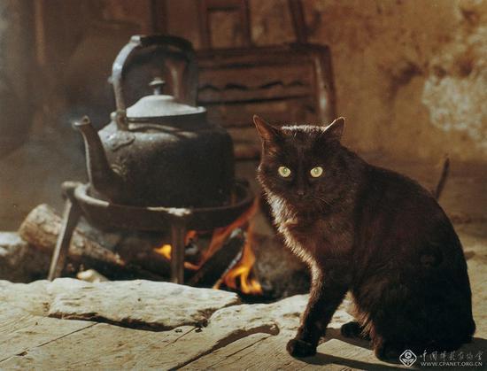 黑猫 陈复礼 摄影(1981年拍摄于黄石寨守林人家)