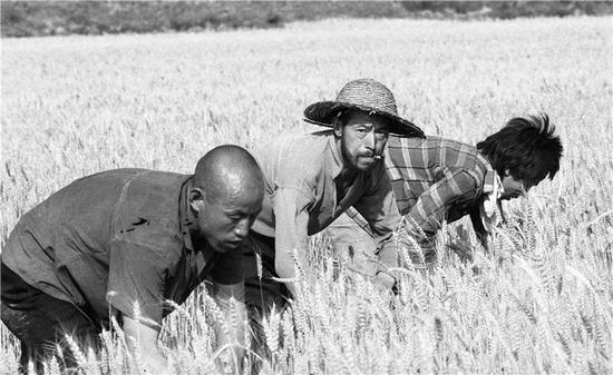 麦客 陕西关中1982-2000(1)