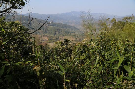 从高处眺望毛招村。