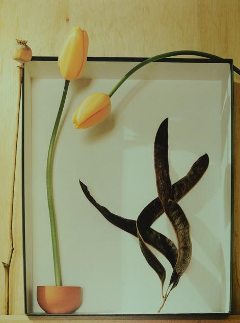 三个时期:过去、现在、将来,Patricia Desmarquest作品,1994