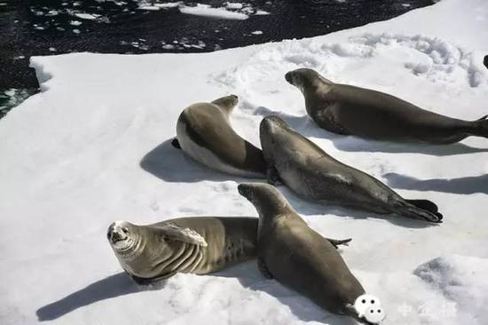 随之而来的美景的确令人目不暇接。冰山被海浪和阳光雕刻成美轮美奂的模样、憨态可掬的企鹅在一起打闹嬉戏……这美妙的极地风光让旅途中的困难都变得微不足道了