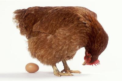 人坐在鸡蛋上能孵出小鸡吗?这个男人做到了!