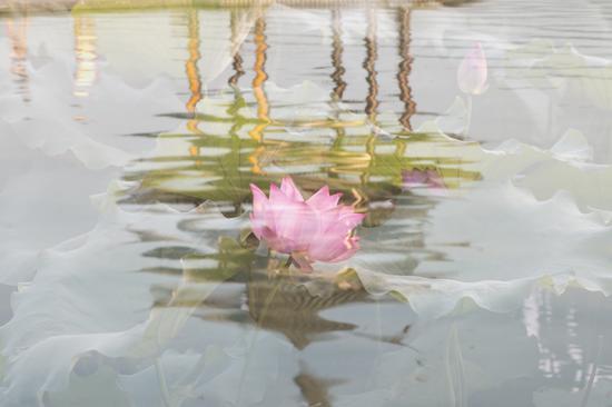 西湖 摄影:黄小玲