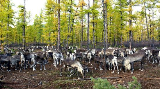 林中鹿群 佚名 摄