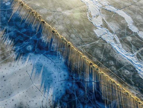 2017 年 2 月 9 日,这是太阳露出地平线后,羊群在西藏冰面投下纤长的蓝色影子。 新华社记者 普布扎西 摄 Blue