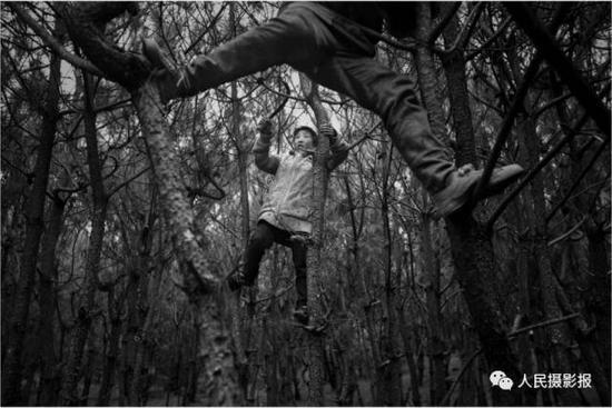 2014年12月26日,年仅11岁的石地正在攀上树枝砍柴,面临深冬,他们每年都会在11月12月份储备很多柴火以便温暖过冬,迎接新年。