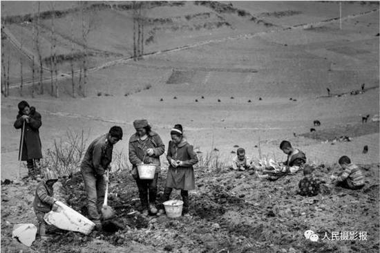 2016年3月9日,孩子们不管大小,从小就跟随父母在田地里劳作或者玩耍。