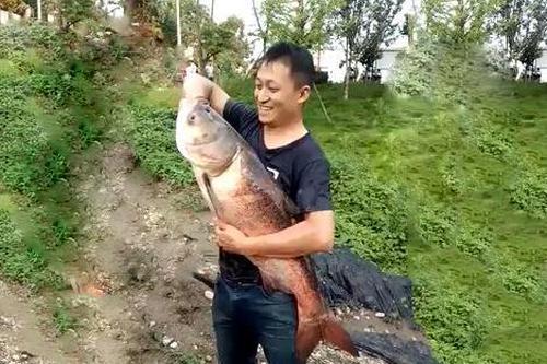 湖水泄洪 市民1小时抓200斤鱼