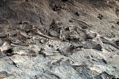 恐龙死亡现场调查:现代法医和犯罪现场分析引入古生物学研究
