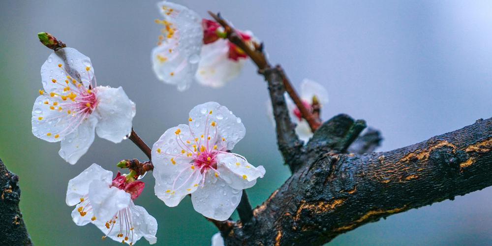 """""""春色满园"""":最是一年春好处"""