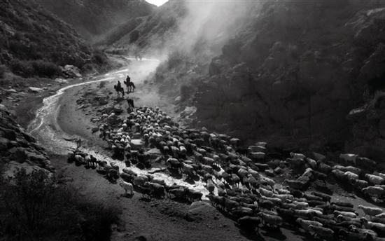 轉場羊群走出山谷 (賽力克·木胡什/攝)