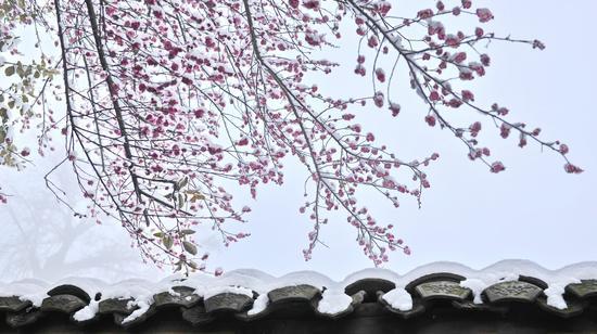 《南国的雪》 钟智勇 6