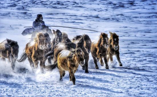 风雪中的牧马人-闫淼