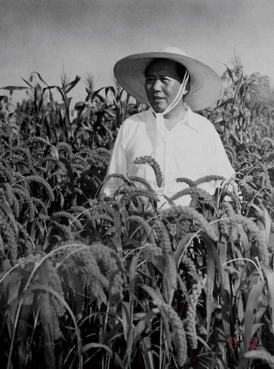 毛泽东视察地方农业发展。 (1958年) 侯波 摄