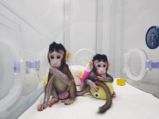 在国际上首次实现了非人灵长类动物的体细胞克隆