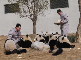 熊猫的团年饭:竹笋苹果窝窝头