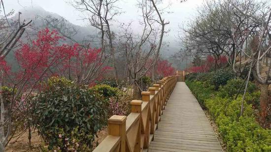 浮山生态园新增十条花木景观路 绿化95%以上