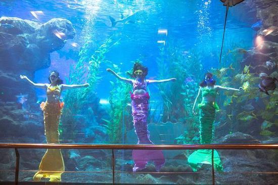 青岛海底世界美人鱼_时间青岛海底世界的三大表演会加场哦   包括\