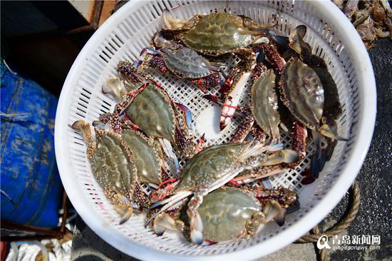 七两一只的大梭蟹,了解一下。