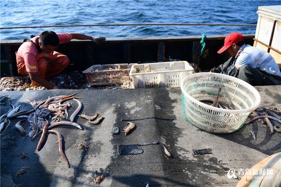 分拣鱼虾。