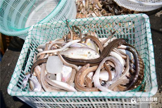 黄花鱼和鳗鱼。