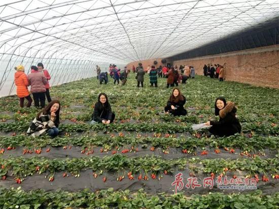 △田园草莓采摘