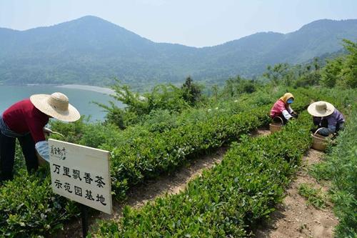 """茶博士王盛:万里飘香茶的""""茶世界"""""""