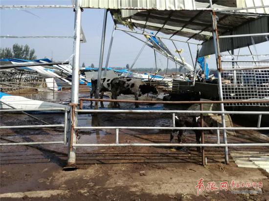 夏格庄镇受灾现场。