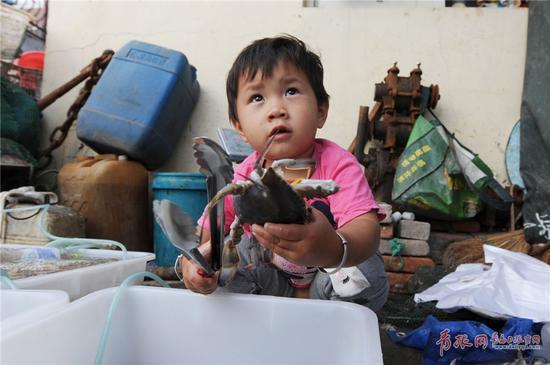 2017年9月4日,在青岛市沙子口码头,一名儿童陪伴家人卖海鲜。