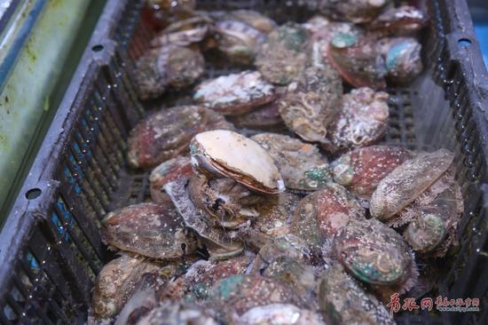 团岛农贸市场里新鲜的大鲍鱼。